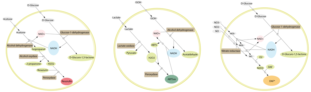library/examples/C2-19-Biochemical-Programming/crn.png